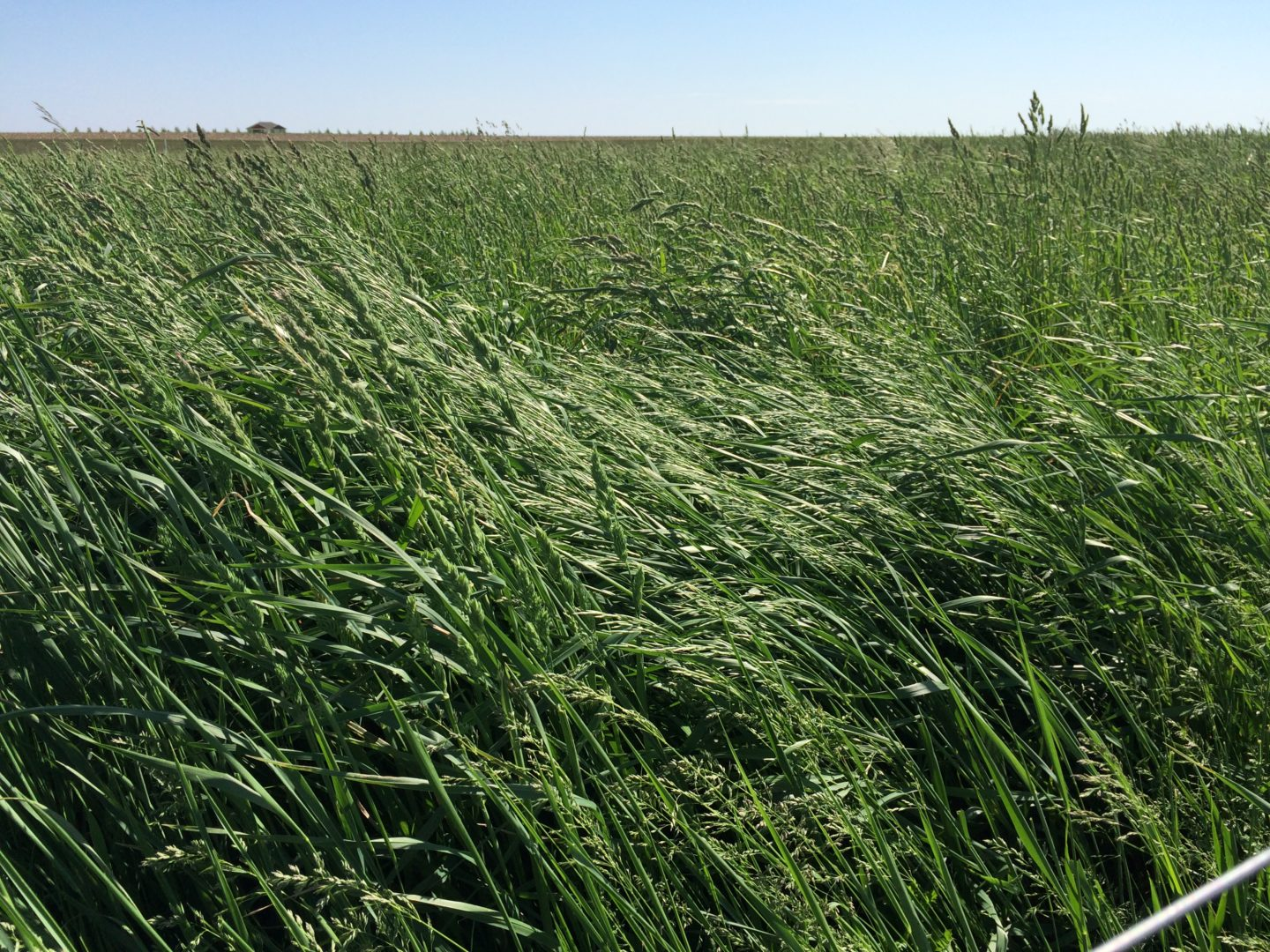Hay And Pasture Grass Seed Mix Millborn Seeds