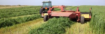 Alternative Forage Options for Feed
