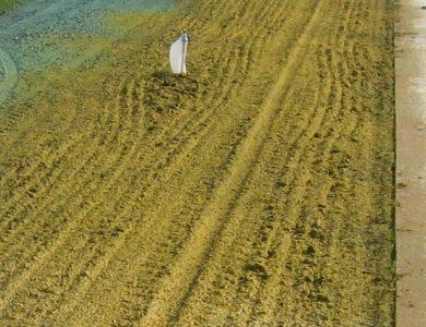 Soil Guard