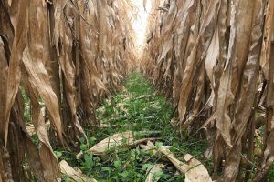Broadcasting Cover Crops - Hi Fly
