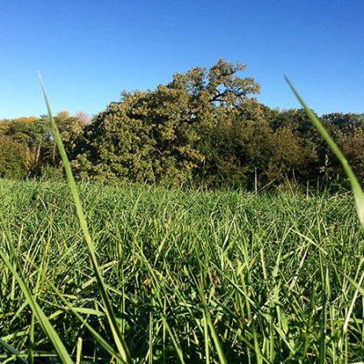 Hay & Pasture