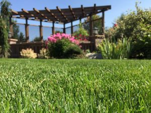 Athletic Grass Seed for Sports Fields
