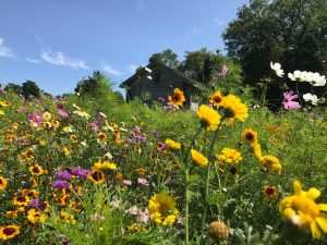 Native Prairie Seed Mix - Prairie Flower Medley Mix™