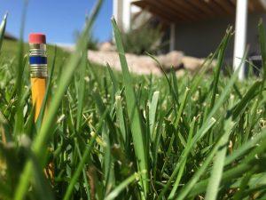 Fescue Grass Seed - Premium Tall Fescue