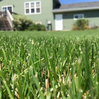 Lawn Grass Seeds - Quality Sun & Shade