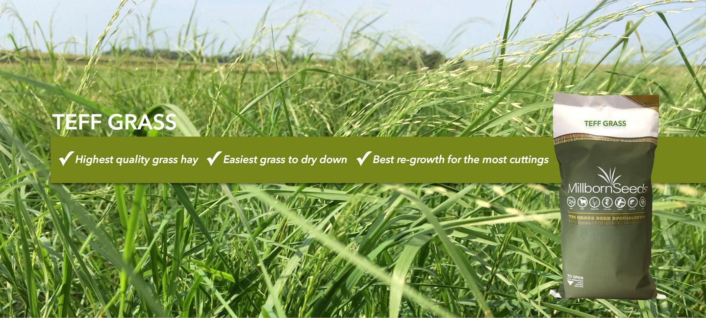 Teff Grass Mix
