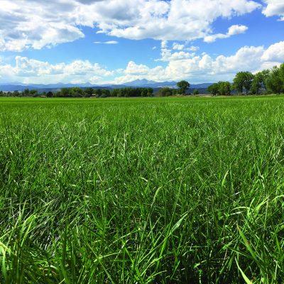 Western Hay & Pasture