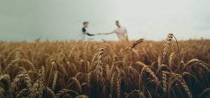 bulk grass seed suppliers - Millborn Seeds