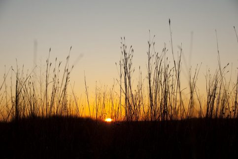 sunset with native grasses