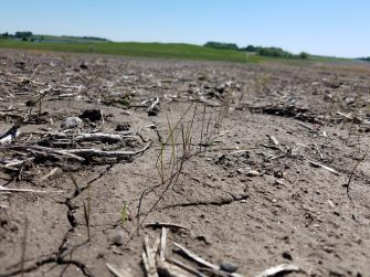 Planning for Your CRP Acres