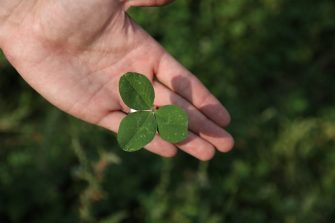 Get a Head Start on Your Clovers This Spring