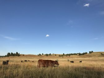 Let Your Grass Rest! Improve Your Stands with Rotational Grazing.